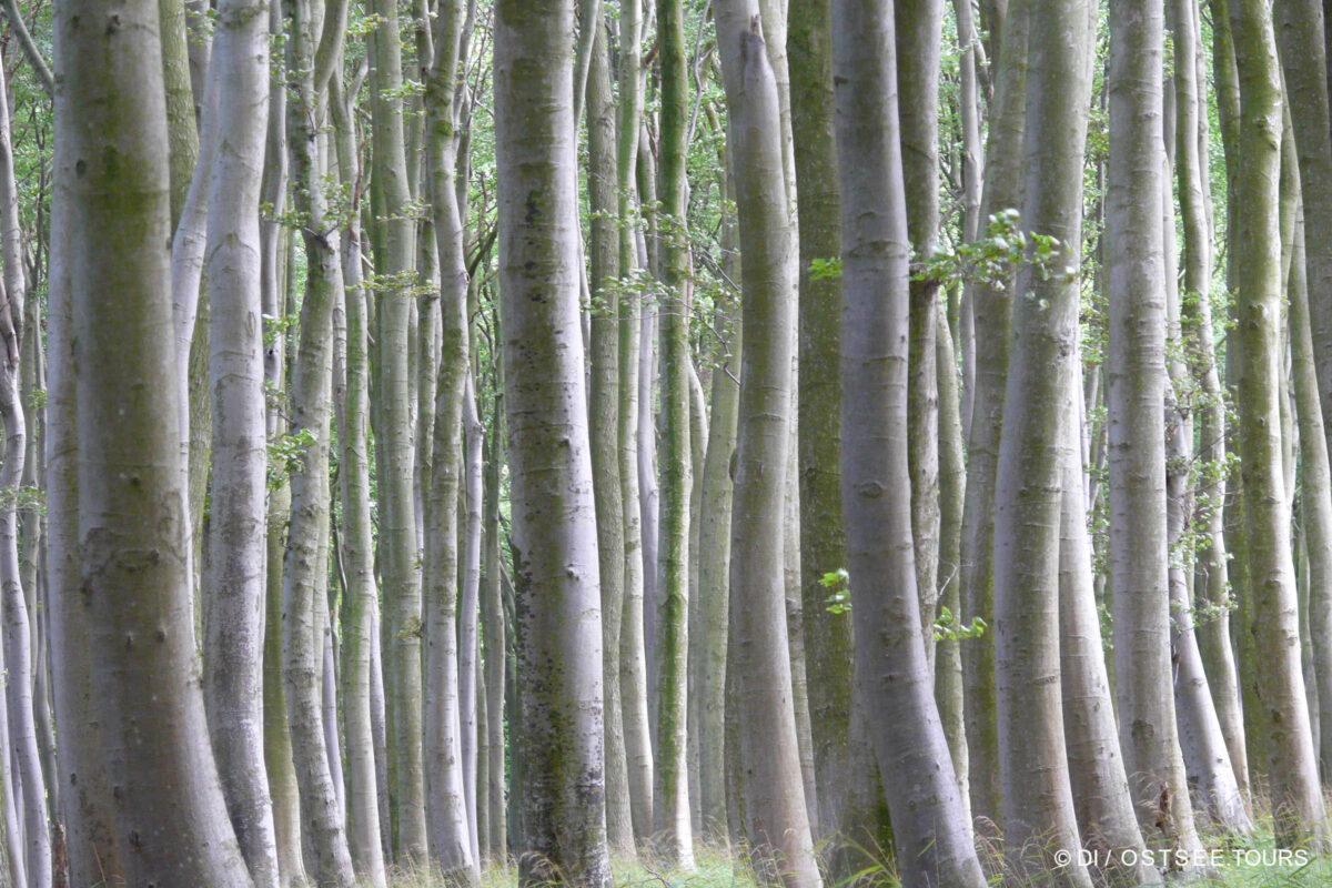 Nationalparks Jasmund