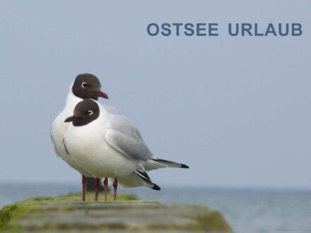 Ostsee-Urlaub zu zweit