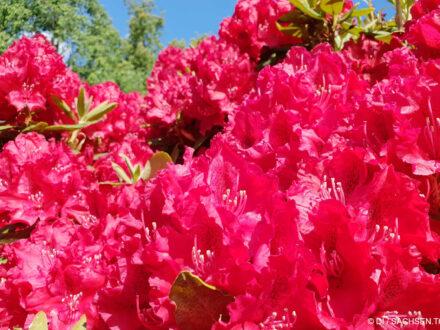 Rhododendronpark - Foto